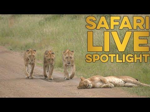 The Owino \'undercats\' of Mara