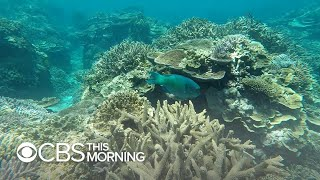 Climate Diaries: Mini-satellites help map the Great Barrier Reef