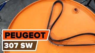 Montaggio Cinghia Poly-V PEUGEOT 307 SW (3H): video gratuito