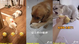 Tiktok Funny Animal / Douyin Cute And Funny Pets Compilation 2019 #36