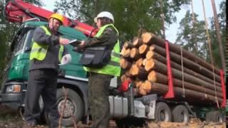 W dechę film o drewnie. BranżaLeśna.pl