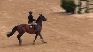 Video of Z LOVE STORY ridden by JILL M. GAFFNEY from ShowNet!