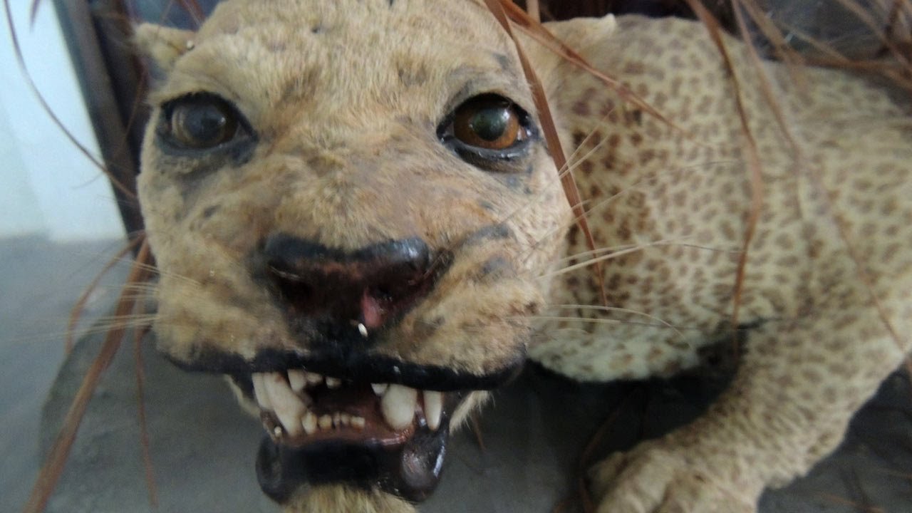Extinct Animals In The Last 10 Years 10 Species