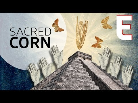 Why Corn Is The Most Sacred Crop — Forklore