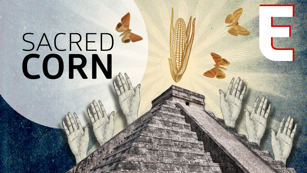 Download Why Corn is The Most Sacred Crop — Forklore