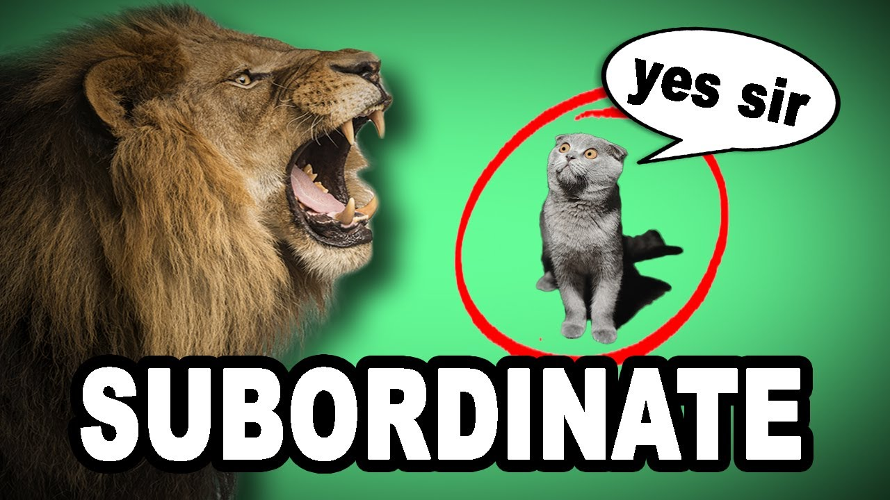 learn english words subordinate