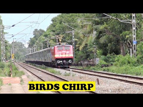 TVC Delhi Swarna Jayanti No Disturbing The Birds