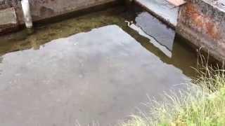 Fish Farm in Tsumago Japan