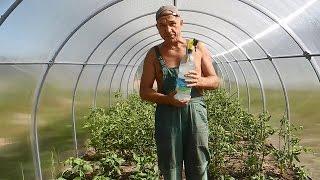 Перцы и помидоры выращиваем в одной теплице ч.4(В этом видео показано как окучивать и чем значительно увеличить рост томатов и перцев в теплице,не прибегая..., 2015-07-06T22:26:14.000Z)
