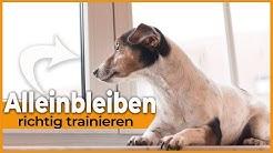 Hund allein zu Hause / So lernt dein Hund das Alleinbleiben / Für Welpen und ältere Hunde