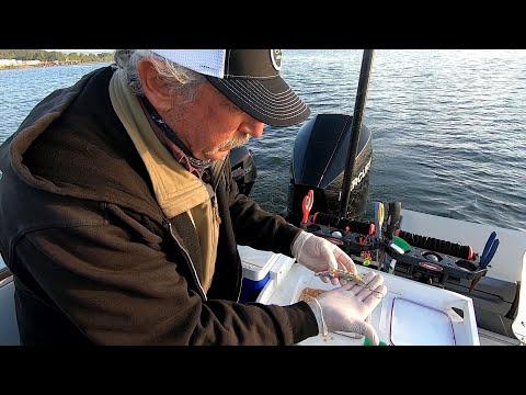 Multnomah Channel Spring Chinook Salmon Fishing