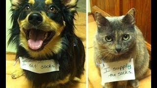 Naughtiest dogs and cats confessing their crimes.