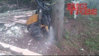 Ponsse Bear felling big tree 5,2m3