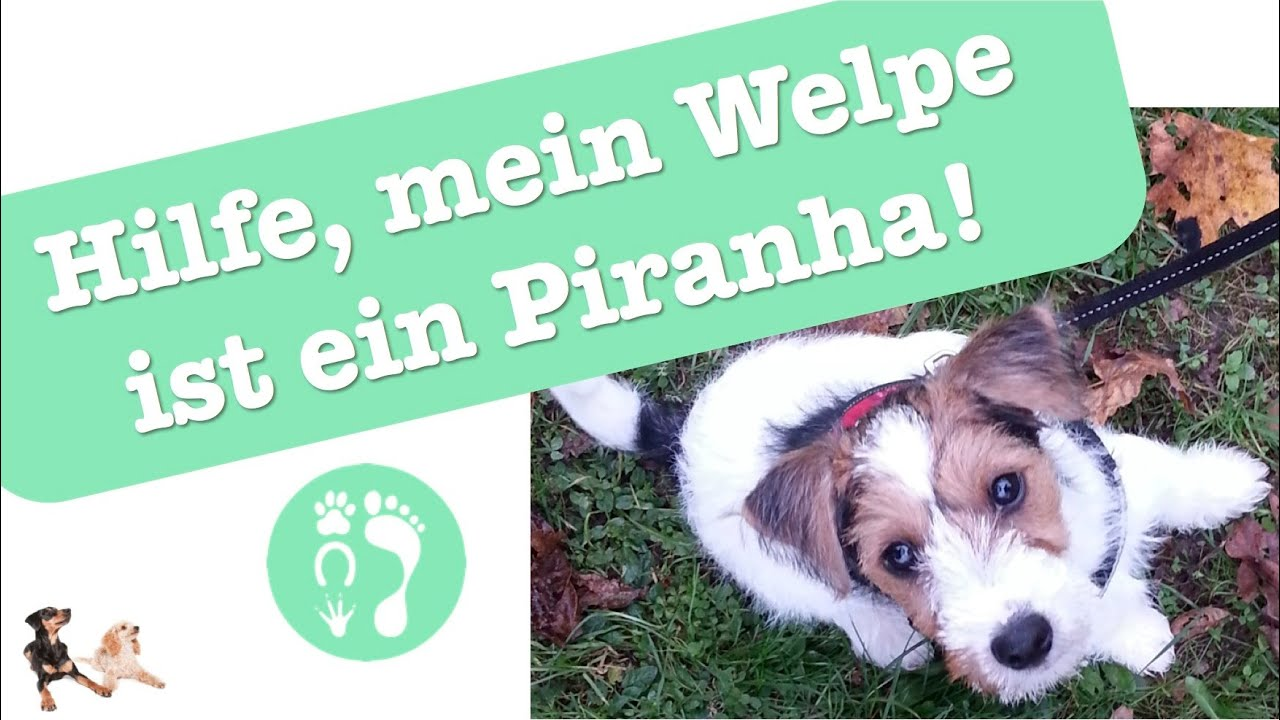 hilfe mein welpe ist ein piranha funnydog tv. Black Bedroom Furniture Sets. Home Design Ideas