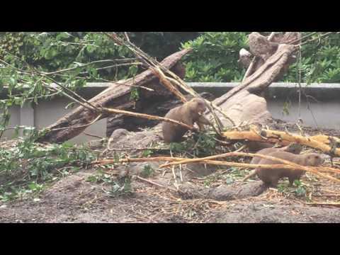 Köpenhamn Zoo 2016