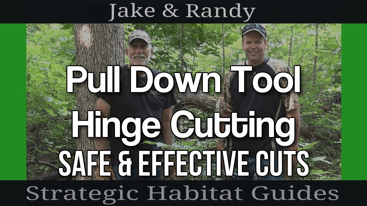 Hinge Cutting Trees Using A Pull Down Tool For Deer