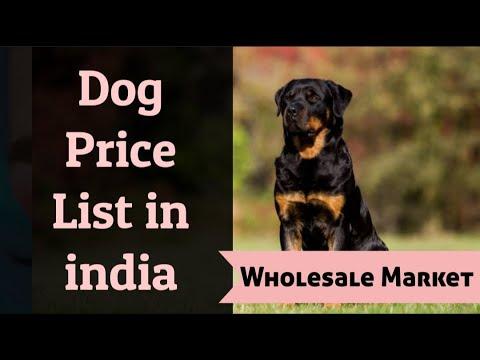 Dog price in india ( Part - 1 )