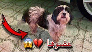 انقاذ كلبه صغيره هجموا عليها كلاب ضاله 💔
