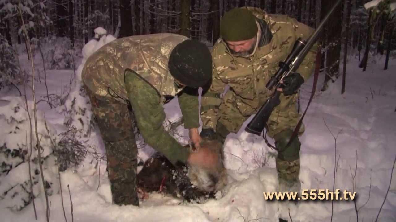 Картинки охота на кабанов в россии зимой