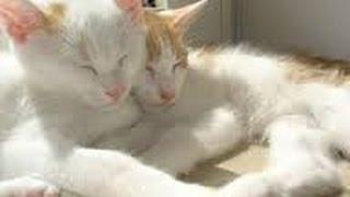 松井玲奈&吉木りさ、2ショット写真に反響「ふたりの天使」「夢のコンビ...