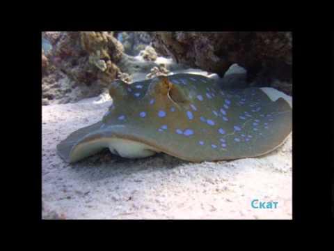 Обитатели водной среды морей океана картинки фото видео