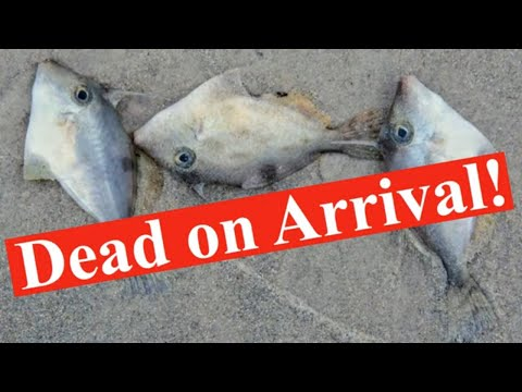 DEAD ON ARRIVAL! - Online Fish Buyers Worse Nightmare! - 2 Guests And A Very Special Offer For YOU!