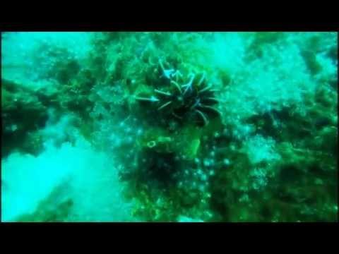 Muck Diving in Ambon Bay, Maluku Islands