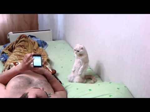 Видео про кошек, смешное до слез - смотреть ютуб видео