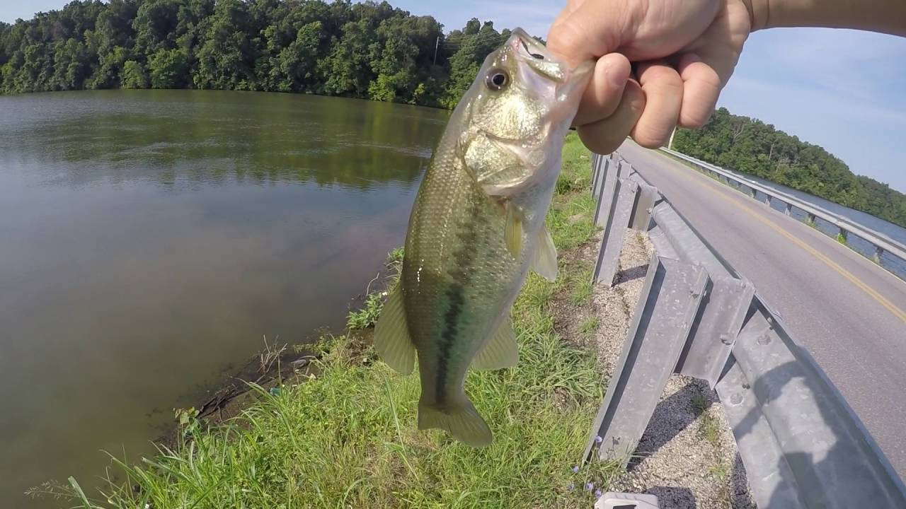 Bass fishing on fellows lake springfield mo youtube for Missouri out of state fishing license