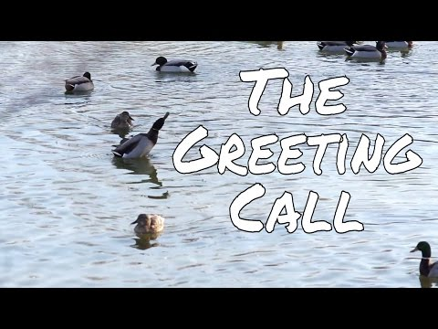 How to do Greeting Call and When to Use it