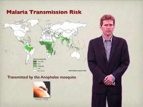 Joseph DeRisi (UCSF) Part 1: Malaria: The disease and parasites