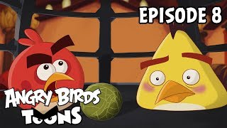 Angry Birds Toons | Miracle of Life - S2 Ep8