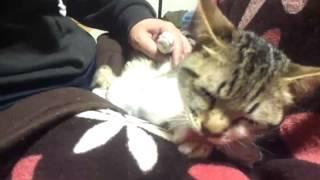 配信元/http://ameblo.jp/yangu-papa/ (C)1匹の犬と2匹の猫と中途難聴...