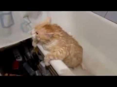 MUST SEE Fat Cat Stuck In Bathtub YouTube