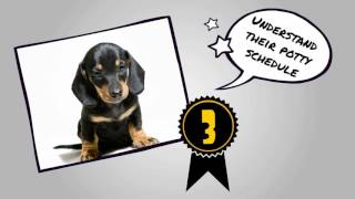 How To Potty Train A Dachshund Puppy Dog