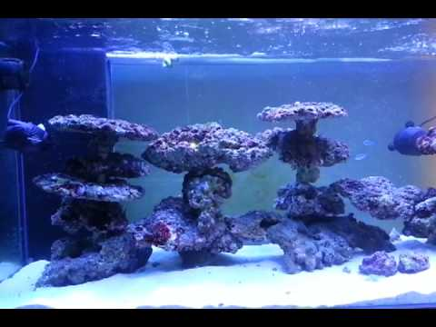My aquascaping on pvc reeftank day 70 3 - YouTube