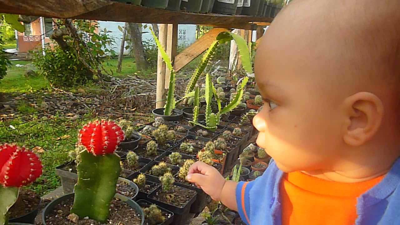 Interacci n de beb con vivero de cactus calobre parte 2 for Vivero de cactus