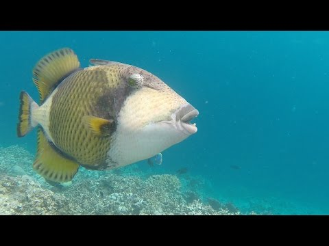 Snorkeling Embudu, Maledives, 2016 07