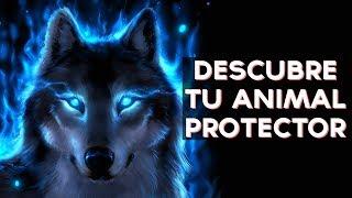 ¿Cuál es tu Animal Protector? | Test Divertidos Video