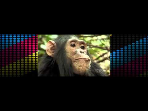 PBS NOVA S34E09   The Last Great Ape