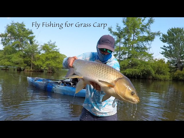 Fly Fishing for Grass Carp -- Tips Part 2