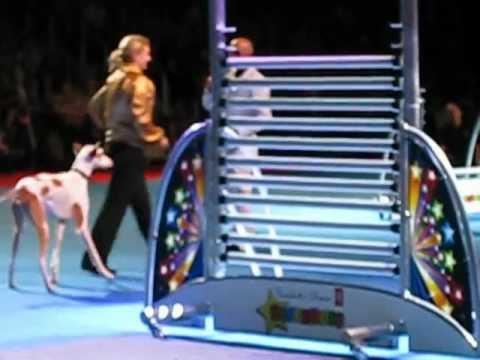 Super Dog jump, on 13- bar's high