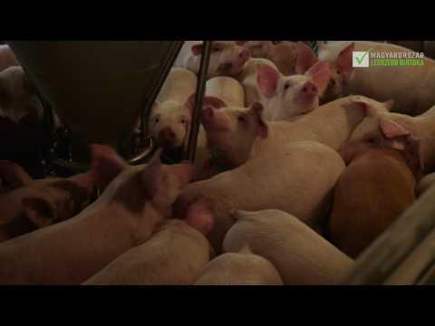 Végh Zsolt, a pakodi Végh farm tulajdonosa, Állattenyésztő birtok jelöltünk