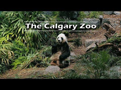 The Calgary Zoo 2019 Trip | Journey Alberta