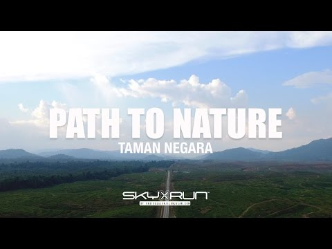 Taman Negara (National Park Malaysia) - Path to Nature - from Drone's Eye