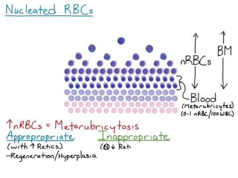Nucleated RBCs