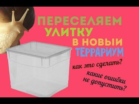 Улитка Ахатина - содержание и уход в домашних условиях
