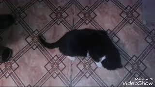 Мой кот уходит на улицу