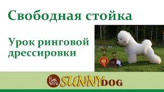 Свободная стойка Ринговая подготовка вашей собаки Уроки хендлинга