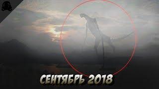 ТОП НЕИЗВЕСТНЫХ СУЩЕСТВ СНЯТЫХ НА КАМЕРУ, СЕНТЯБРЬ 2018